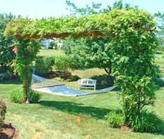 Outdoor Hammock Arbor